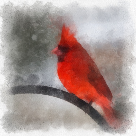 Cardinal by Kelly Bryant