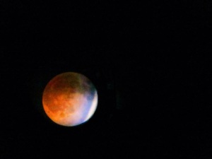 Blood Moon   Photo by Colleen Lienhard